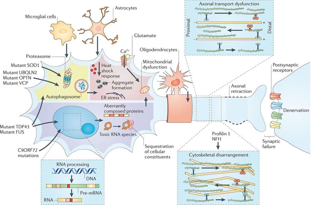 Nature Reviews Neuroscience Journal